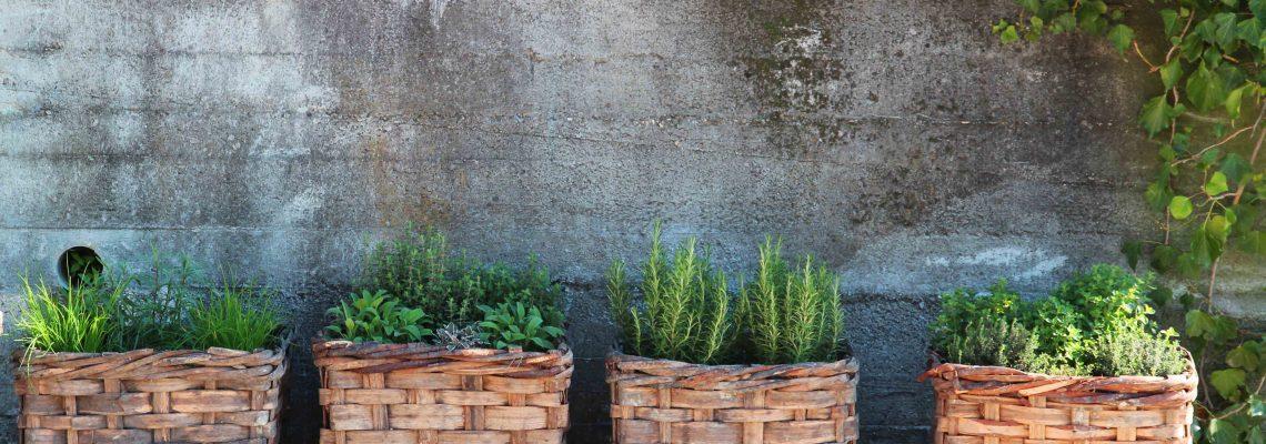 Herbs at Azienda Agricola Sukula